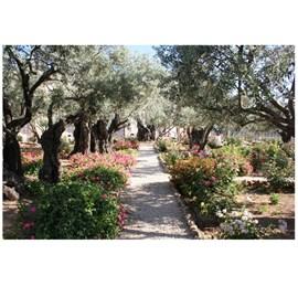Quadro Decorativo Personalizado A4 |  Getsemani